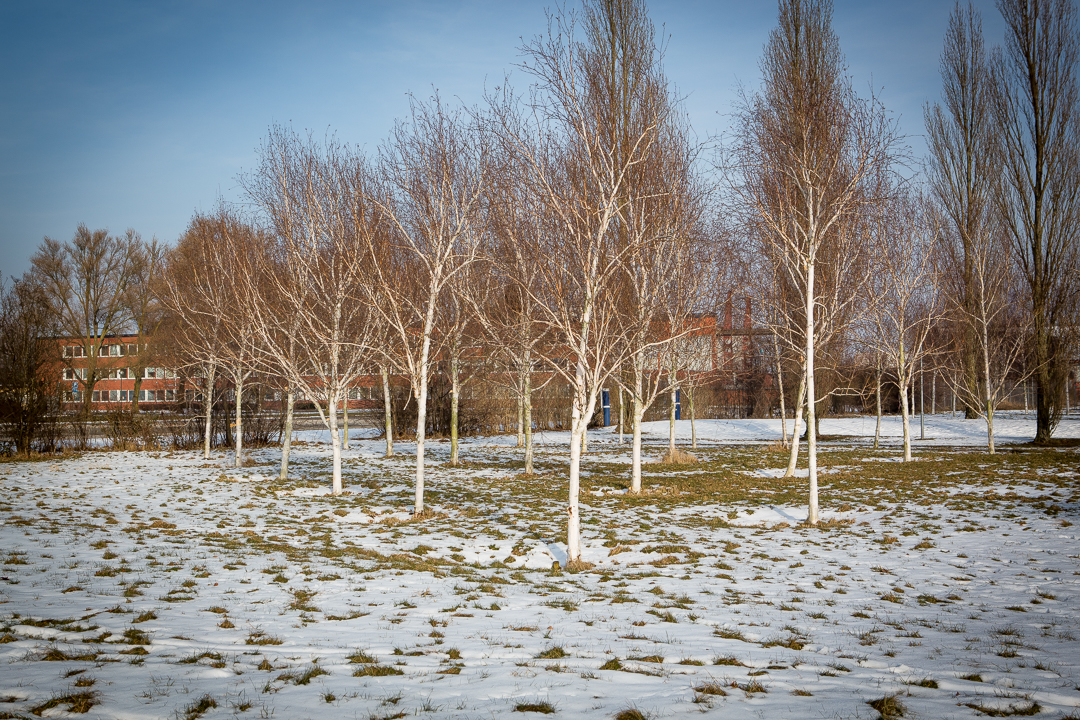 Bärnstenen Vinter. Foto: Torbjörn Lagerwall