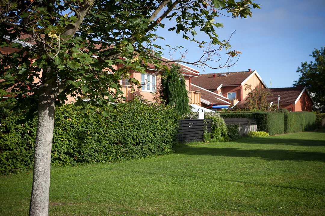 Bärnstenen Sommar. Foto: Torbjörn Lagerwall